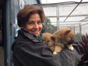 RL with dingo pups%2c July 2015