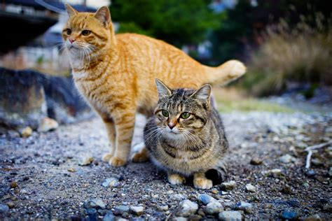 Fiona Probyn-Rapsey on Australia's war on feral cats
