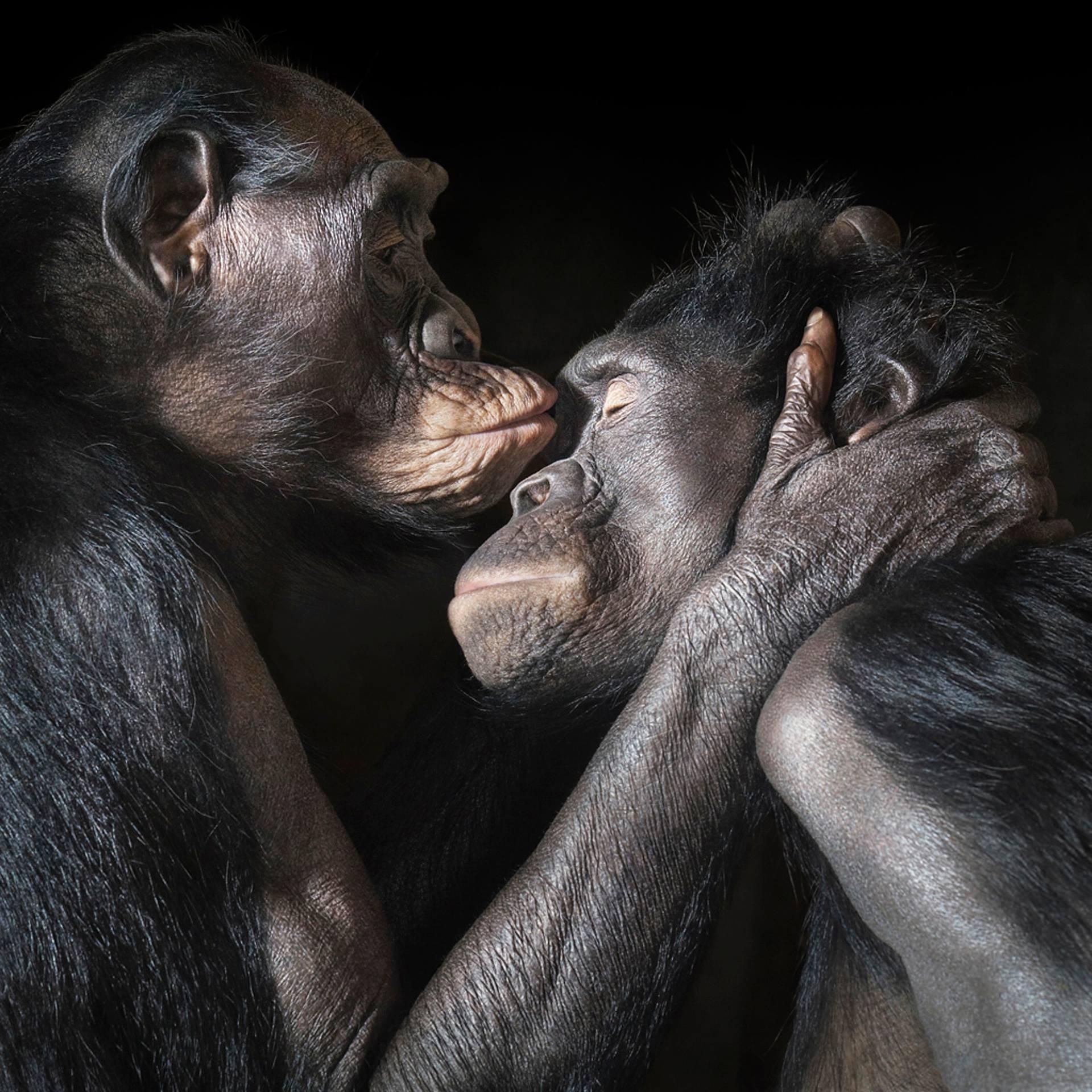 Nonhuman animal legal personhood – Sakshi Aravind